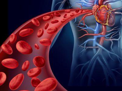 ¡Conoce 7 enfermedades comunes del sistema circulatorio!
