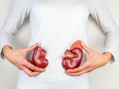 ¡Conoce todo acerca de los trasplantes! Que órganos y tejido es trasplantable y en que ocasiones se puede presentar un rechazo