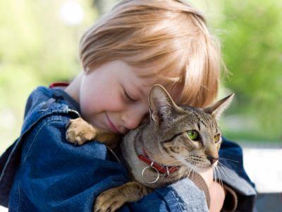 ¿Tienes un amigo gatuno en casa? ¡Entonces conoce cuáles son las enfermedades que se pueden transmitir a los humanos y cómo prevenirlas!